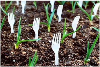 نکات باغبانی