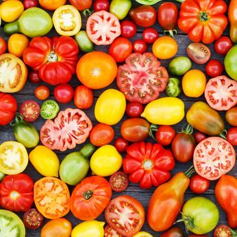 انواع گوجه فرنگی (tomato varieties)