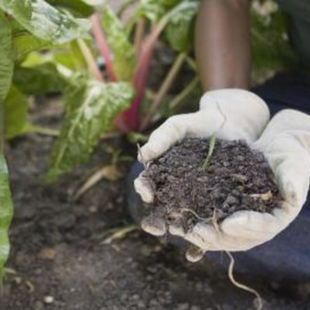 خاک مناسب برای کاشت کلم چینی