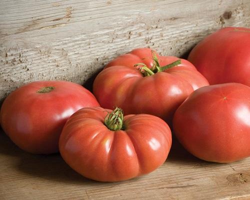 گوجه فرنگی جانسون آلمانی