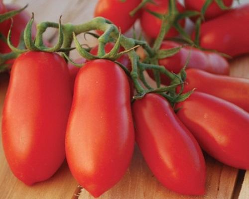 گوجهفرنگی تایرن