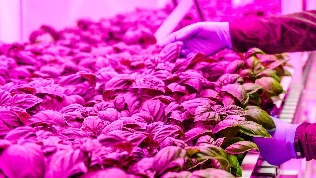 چراغ مخصوص رشد گیاه