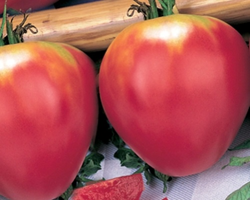 گوجه فرنگی کور دی بو