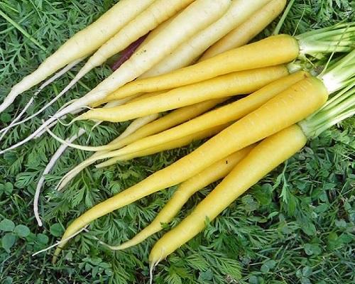 هویج زرد ایرانی