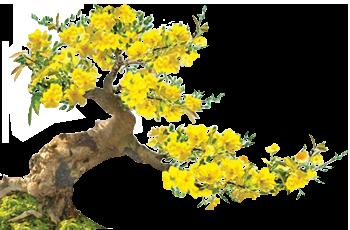 درخت ساکورا ژاپنی