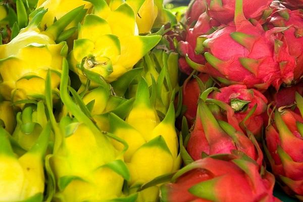میوه اژدها زرد و قرمز